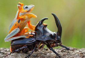 10 criaturinhas homenageando as grandes