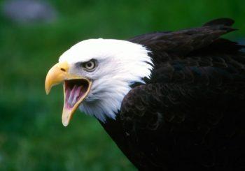 10 aves que você realmente deve evitar