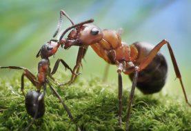 10 imitações das formigas
