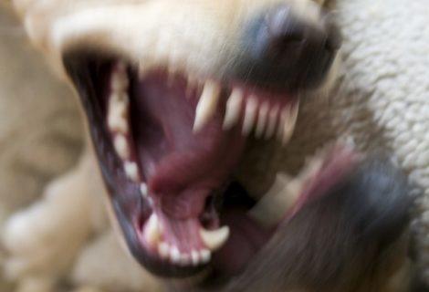 10 fatos estranhos sobre cães