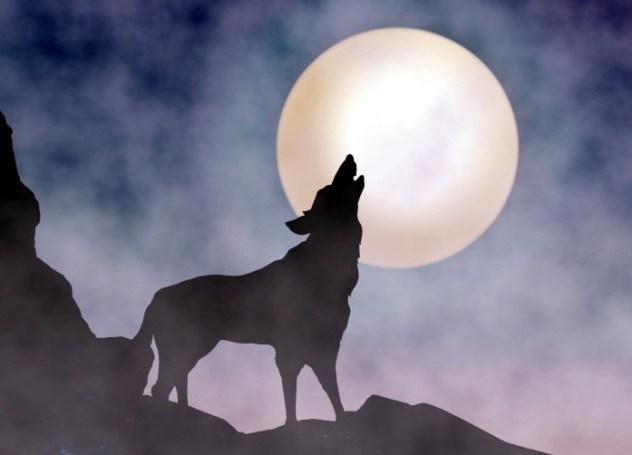 Cu Sith Lobo Lua