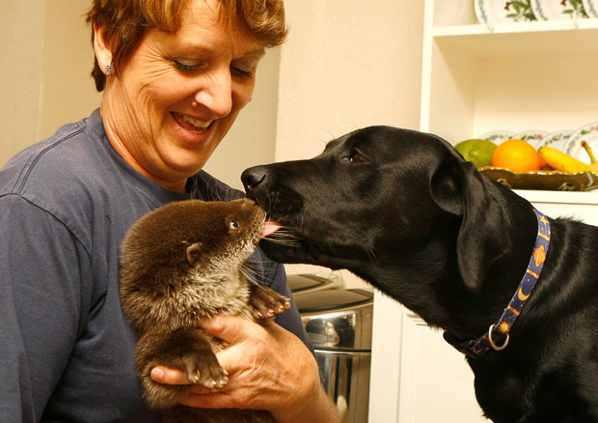 Cão e lontra