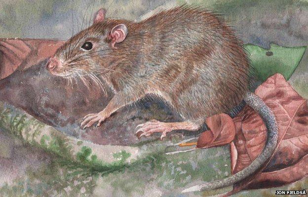 Rato espinhoso
