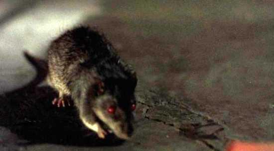 rato zumbi olhos vermelhos