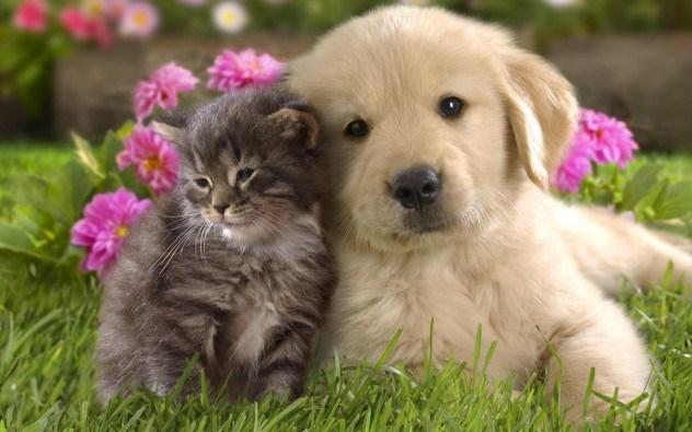 Cães e gatos podem te cegar