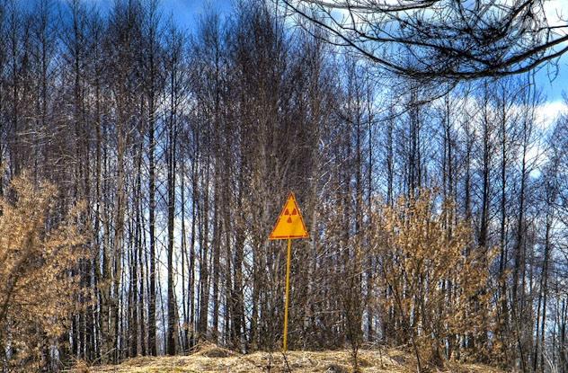 Floresta Chernobyl radiação