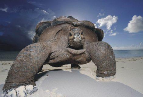 10 espécies bizarras de tartaruga