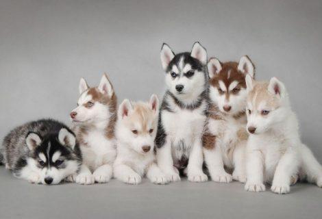 10 curiosidades sobre animais de estimação