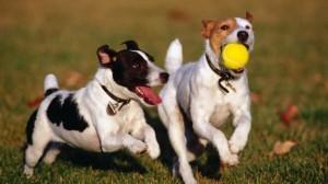 Tempo de vida cão cães