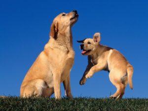 Google é uma companhia de cão cães