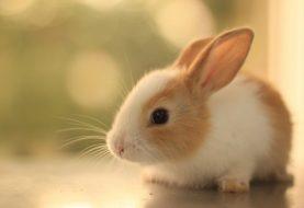 Top 10 criaturas mais fofas
