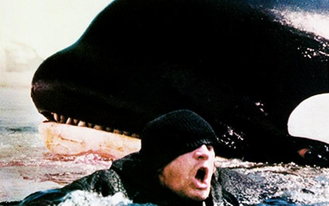 Baleia ataca banhista na praia