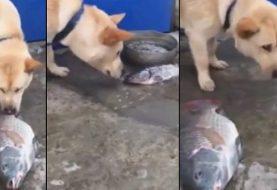 Emocionante: cachorro tenta salvar peixe que está morrendo