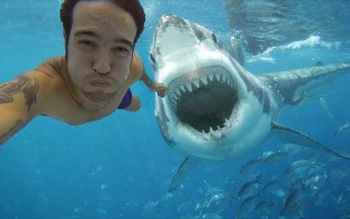 Ataque de tubarão durante selfie dá o que falar na web