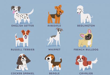 As raças de cães de acordo com a sua nacionalidade