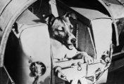 10 animais lançados ao espaço