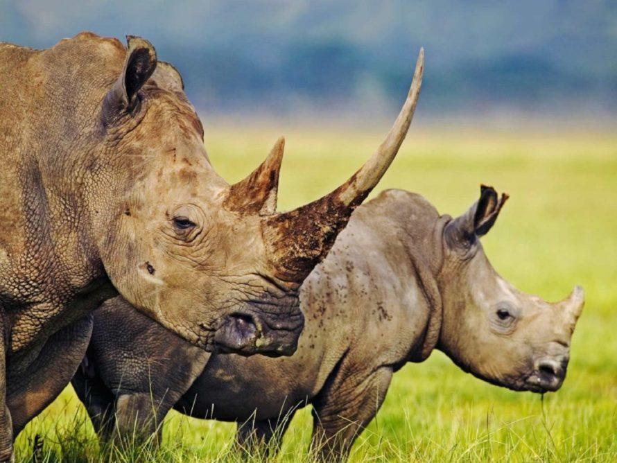 10 lindas espécies que estão extintas