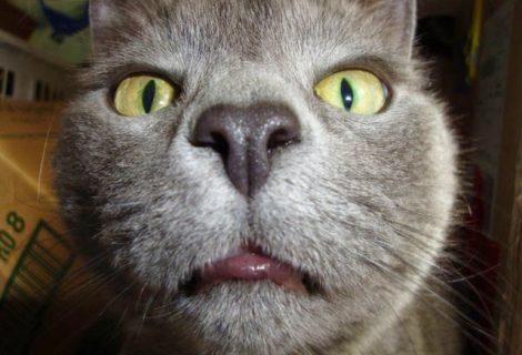 Gatos fazendo Selfie como humanos