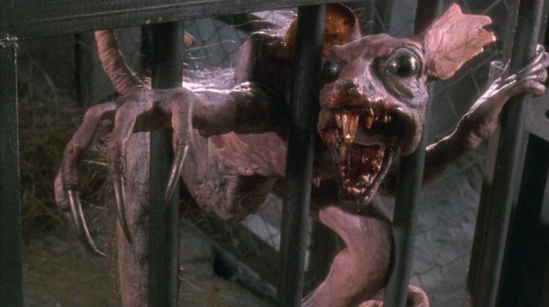 rato-macaco-da-sumatra-king-kong