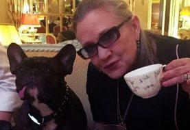 Cão de Carrie Fisher vê Star Wars: Os Últimos Jedi e reconhece a dona