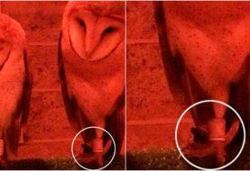Shopping de SP é acusado de amarrar corujas em exposição de Harry Potter
