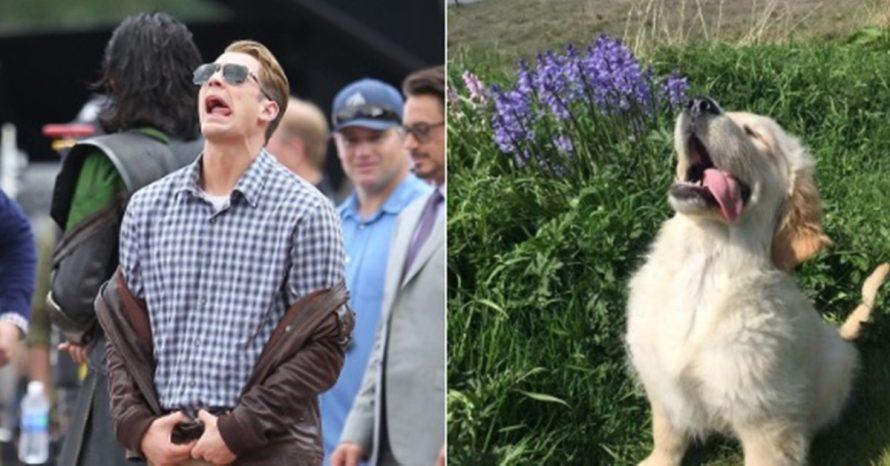 Fofo e hilário! Perfil no Twitter compara fotos de Chris Evans com golden retrievers