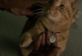 Nick Fury perdeu um olho por conta do gato da Capitã Marvel?