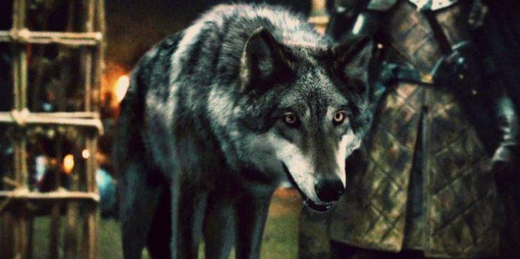 lobos gigantes GoT