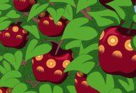 One Piece: anime explica o nome e poderes das frutas do diabo Smile