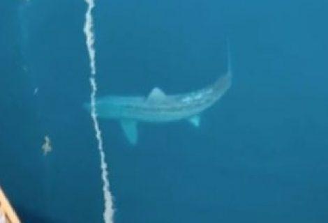 TikTok: vídeo de tubarão gigante acende teoria de 'Megalodon'